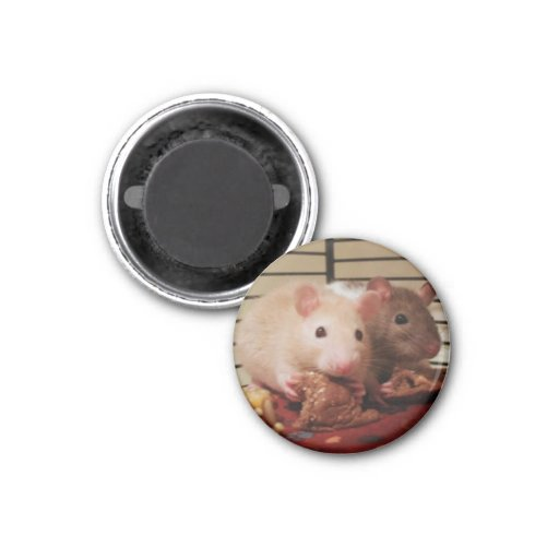 Rats eating peanut butter sandwiches refrigerator magnet