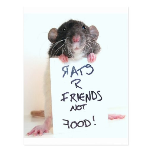 Rats R Friends Not Food 2 Post Cards