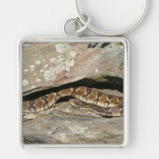 Rattlesnake at Shenandoah National Park Key Ring