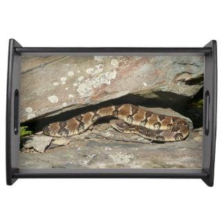 Rattlesnake at Shenandoah National Park Serving Tray
