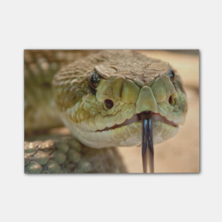 Rattlesnake Closeup Photo Post-it Notes