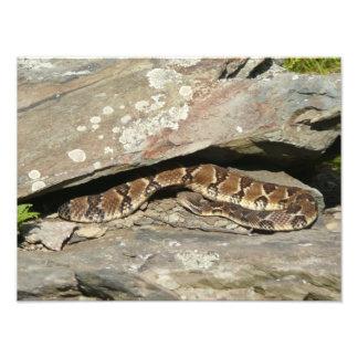 Rattlesnake Photo Print