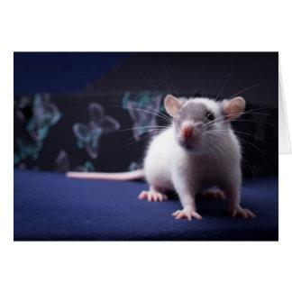 Ratty card