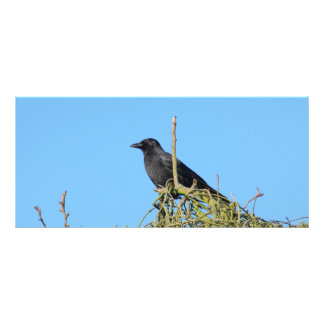 raven in the tree rack card design