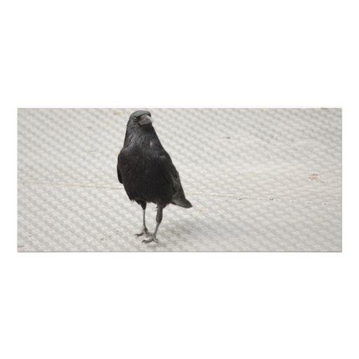 raven on metall full color rack card