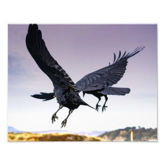 Raven's in flight together photo print