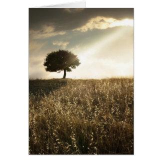Rays of light break through the dramatic sky greeting card