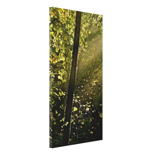 Rays of Light Breaking Through the Trees Canopies Canvas Print