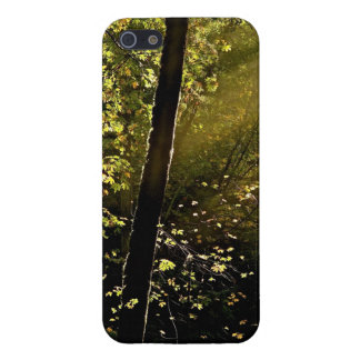 RAYS OF LIGHT THROUGH TREES CASE FOR iPhone 5/5S