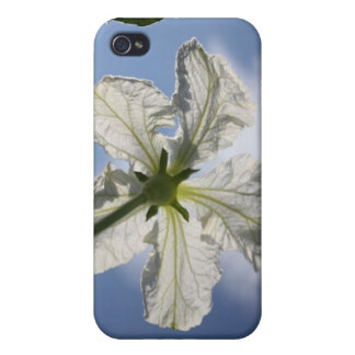 Reach for the Sky! iPhone 4 Case