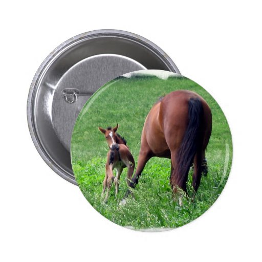 Reaching Foal with Mare Pinback Buttons