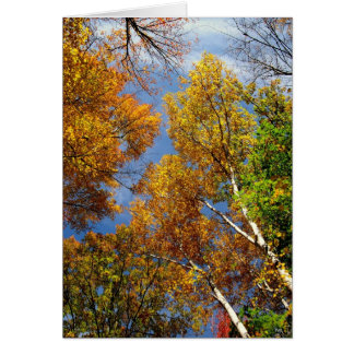 Reaching to the Sky, Tall Trees, Blank Note Card