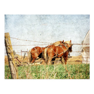 Ready For Work, Two Draft Horses Postcard