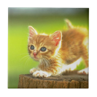 Ready To Pounce Kitten Small Square Tile