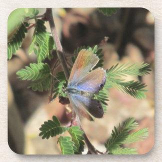 Reakirt's Blue Butterfly Coasters