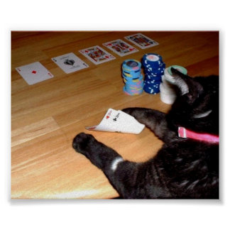 REAL KITTY CAT PLAYING POKER PRINT