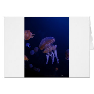 Real photo taken of jelly fish card