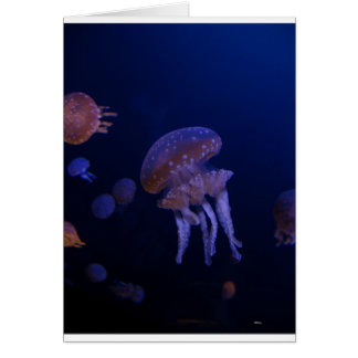 Real photo taken of jelly fish greeting card
