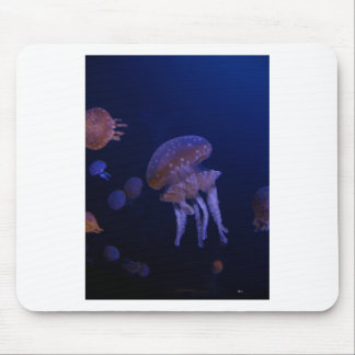 Real photo taken of jelly fish mouse pad