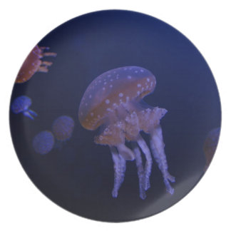 Real photo taken of jelly fish party plates