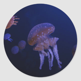Real photo taken of jelly fish round sticker