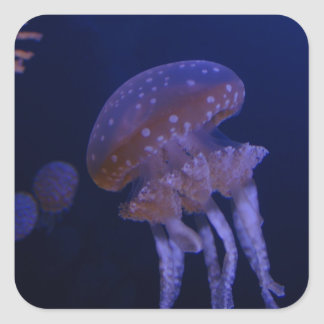 Real photo taken of jelly fish square sticker