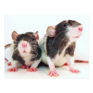 Real Women Own Rats! Post Cards