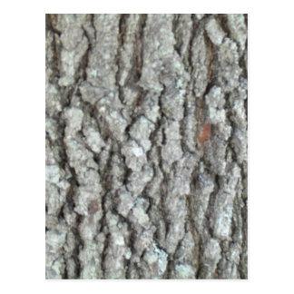 Real Wood Camouflage Oak Tree Bark Nature Camo Postcards
