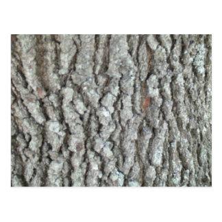 Real Wood Camouflage Oak Tree Bark Nature Camo Post Card