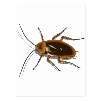 Realistic Brown Cockroach Insect Postcard