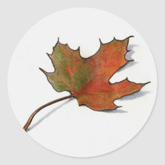 Realistic Maple Leaf: Color Pencil Art Classic Round Sticker