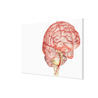 Realitic rendering of the human brain canvas print