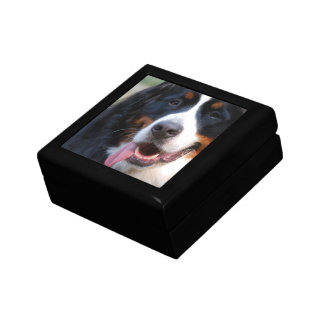 Really Cute Bernese Mountain Dog Gift Box