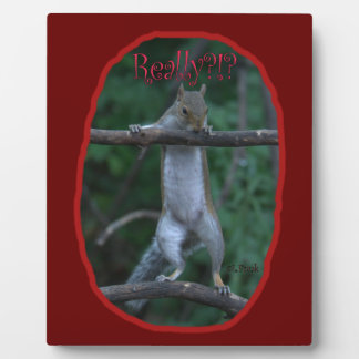 """""""Really?!?"""" ... Cute, funny image of Squirrel Display Plaque"""