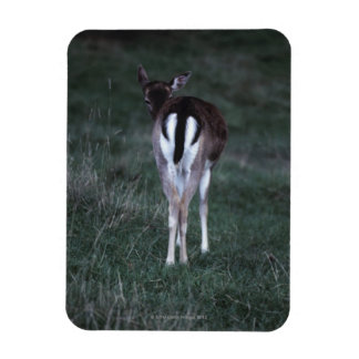 Rear view of a deer , New Zealand Rectangular Photo Magnet