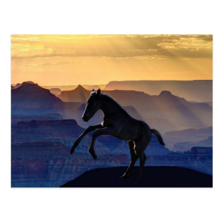 Rearing baby horse and canyons post cards