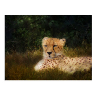 Reclining Cheetah at Fossil Rim Wildlife Center Postcard
