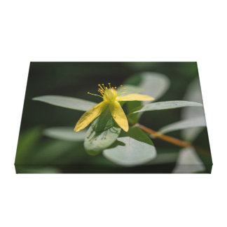 Reclining St. Andrews Cross Floral Canvas Print