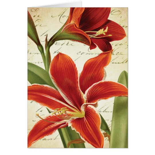 Red Amaryllis Christmas Flower Botanical Card