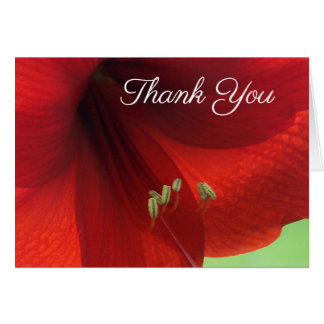 Red Amaryllis Flower Thank You Notes