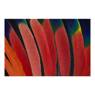 Red Amazon Parrot Feathers Poster