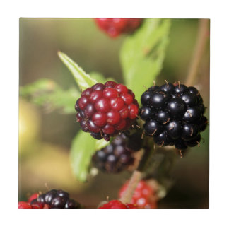 Red and black blackberry fruits. small square tile