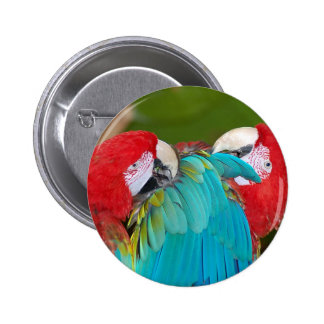 Red and blue macaw parrot print pinback button