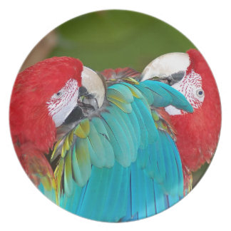 Red and blue macaw parrot print dinner plate