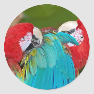 Red and blue macaw parrot print round sticker