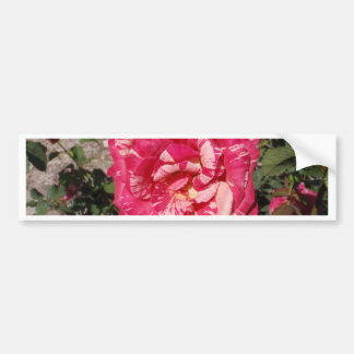 Red and Cream Rose Bumper Stickers