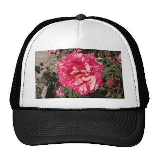 Red and Cream Rose Hat