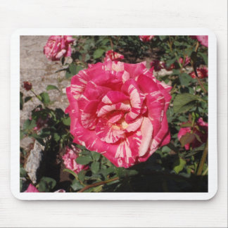 Red and Cream Rose Mousepads