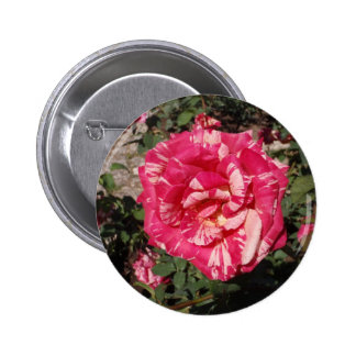 Red and Cream Rose Pinback Button