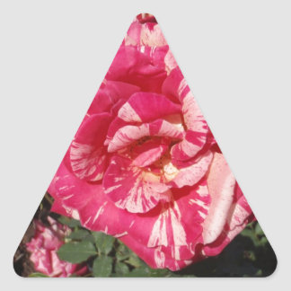 Red and Cream Rose Triangle Sticker